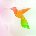 Colorful hummingbird abstract symbol illustration Stock Photos