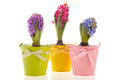 Colorful Hyacinths Stock Photography