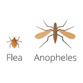 Colorful insects icons isolated wildlife wing detail summer worm caterpillar bugs wild vector illustration.