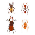 Colorful insects icons wildlife wing detail summer bugs wild vector illustration