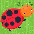 Colorful ladybug on the green background. Happy animal. Vector illustration, cartoon baby.