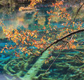 Colorful lake in jiuzhaigou autumn reputed as a fairyland located county of aba tibetan and qiang Stock Photos