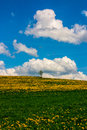 Colorful landscape with dandelion meadow and one single tree Royalty Free Stock Photos