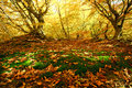 Colorful landscape the green cover of moss with yellow leaves in autumn beech forest Stock Photography