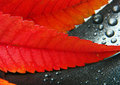 Colorful leaf Stock Photography