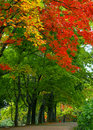 Colorful leave and fall forest Stock Photo