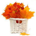 Colorful leaves - autumn arrangement Stock Images