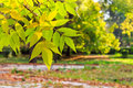 Colorful leaves close up on a blury autumn city park background of yellow green of in the Royalty Free Stock Photo