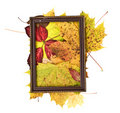 Colorful leaves in rusty frame on white background Royalty Free Stock Photo