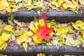 Colorful leaves on the steps of staircase Royalty Free Stock Photo