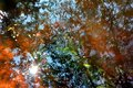 Colorful leaves on the water, abstract texture in the autumn tones. Royalty Free Stock Photo