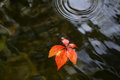 Colorful leaves on water Royalty Free Stock Photo