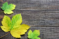 Colorful leaves on a wooden table Stock Photos