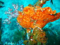 Colorful Life in Coral Reef Stock Photo