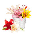 Colorful lily flowers in bucket isolated on white background Stock Images
