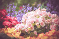 Colorful little flower blossom in garden with vintage retro tone