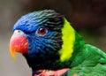 Barvitý papoušek pták