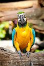 Colorful macaw Stock Photos