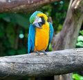 Colorful macaw Stock Images