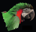 Colorful  macaw parrot head on black background