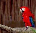 Colorful macaw on a tree branch Stock Photography