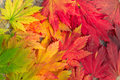 Colorful maple leaves beautiful colored in benxi liaoning china Royalty Free Stock Photos