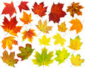 Colorful maple leaves collection isolated on white Royalty Free Stock Image