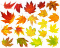 Colorful maple leaves collection isolated on white Royalty Free Stock Photography