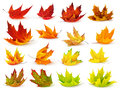 Colorful maple leaves collection isolated on white Royalty Free Stock Images
