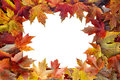 Colorful maple tree fall leaves border autumn with white blank center for text Royalty Free Stock Image