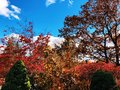 Colorful Maple Tree And Oak Tr...
