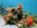 Colorful marine life feather duster worms sea sponges caribbean sea Stock Image