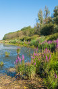 Colorful marshy landscape in summer Royalty Free Stock Photo