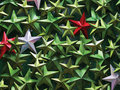 Colorful metals stars Royalty Free Stock Photo