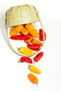 Colorful mini peppers orange yellow and red bell Stock Image