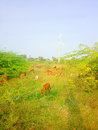 Colorful modern rustic idyll pastoral in India Wind farm Royalty Free Stock Photo