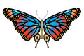 Colorful Monarch butterfly isolated