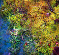 Colorful mossy background close up Royalty Free Stock Photos