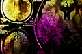 Colorful MRI of brain Royalty Free Stock Photo