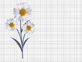 Colorful Naturalistic Beautiful 3D Chamomile Background Vector I