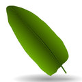 Colorful Naturalistic Palm Leaf. Vector Illustration.