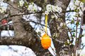 Orange Easter egg on the tree Royalty Free Stock Photo