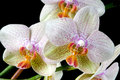 Colorful Orchids Royalty Free Stock Image