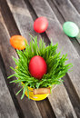 Colorful painted easter egg on a fresh green grass in yellow bucket Royalty Free Stock Images
