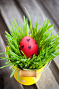 Colorful painted easter egg on a fresh green grass in yellow bucket Royalty Free Stock Photo