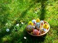 Colorful painted easter eggs and little sheep on a green grass