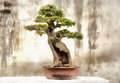 Colorful painting of Bonsai tree