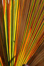 Colorful Palm Leaf Royalty Free Stock Photo