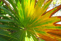 Colorful palm tree leaf Royalty Free Stock Photo