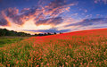 Colorful panorama Royalty Free Stock Photo